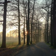 Rows of Trees - Rays of Light by Caspar ter Horst on 500px