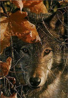 Autumn Eyes by Collin Bogle All Other Collin Bogle Prints   eBay