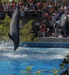 Delfin en el zoo de Madrid Más información en: http://www.eluniversoanimal.com/cetaceos/Cetaceos.html