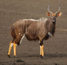 Especie Animal, Mundo Animal, Rare Animals, Animals Images, Strange Animals, Beautiful Creatures, Animals Beautiful, African Antelope, Wild Animals Photography