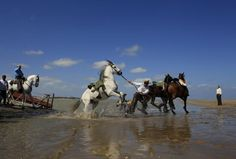 The Rocio Pilgrimage in Huelva. Most participants travel on horseback their way to the church. Huelva, Andalusia, Spain