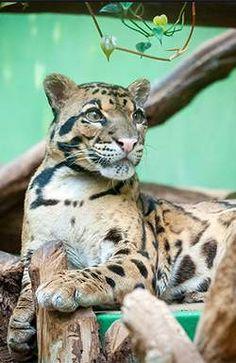 Весь день можно провести на этой территории, это место в определенном кругу называют Пражский Зоо. Отличительной чертой зоопарка является тот открытый и весьма дружелюбный мир, который он дарит каждому ребенку. Panther, Animals, Animales, Animaux, Animal, Animais, Black Panthers