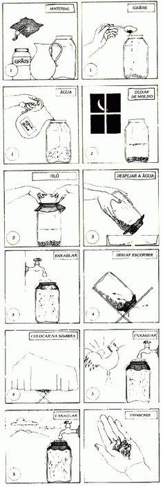 Como germinar grãos e sementes.