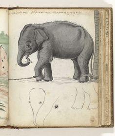 Jan Brandes | Jonge olifant aan boom, Jan Brandes, 1785 | Zwartwittekening van een olifant van een jaar oud met zijn poten aan bomen gebonden en enkele penseelschetsen van het hoofd van deze olifant. Deze tekening hoort rechts van deel 1, p. 80. Met opschrift. Onderdeel uit het schetsboek van Jan Brandes, dl. 2 (1808), p. 137.