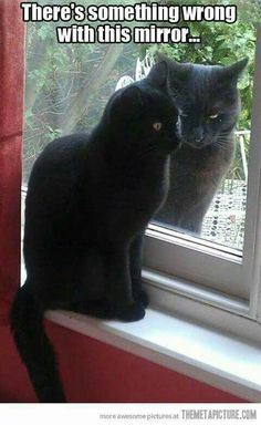 Are you looking for really funny black cat memes? Look no further, we've gathered funny black cat memes just for you to share on your social media accounts Cute Little Animals, Cute Funny Animals, Cute Cats, Adorable Kittens, Funny Animal Quotes, Animal Jokes, Animal Captions, Cat Sayings, Funny Cat Memes