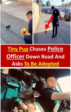 #tiny #pup #chases #police #officer #down 3road and asks to be #adopted #animals #pets #amazing Officer Down, Police Officer, Pet Day, Pup, Adoption, Cute Animals, Amazing, Sweet, Supreme