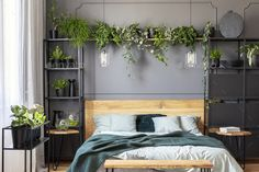 Buy Plants and lamps above wooden bed with green blanket in grey bed by bialasiewicz on PhotoDune. Plants and lamps above wooden bed with green blanket in grey bedroom interior. Gray Bedroom Walls, Wooden Bedroom, Grey Room, Bedroom Green, Grey Walls, Home Bedroom, Bedroom Ideas, Bedroom Plants Decor, Green Blanket