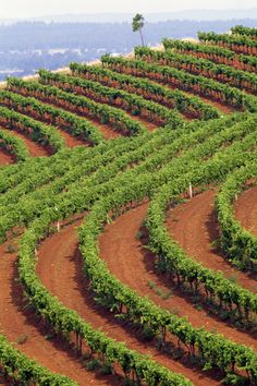 Vineyards of Australia