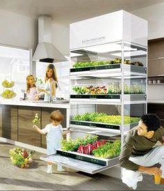 Indoor salad gardens are practical in the kitchen.