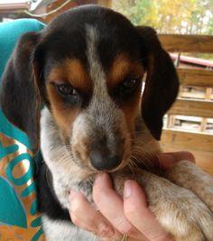 15 Best Flea Treatment For Pets Images Dog Cat Pets Gatos