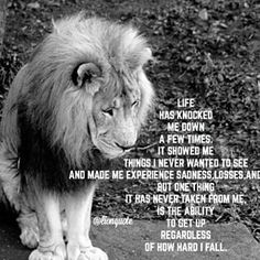 quotes with pictures of lions Leo Quotes, Strong Quotes, Fall Quotes, Positive Inspiration, Spiritual Inspiration, Fighter Quotes, Heart Of A Lion, Leo Zodiac Facts, Stories Of Success