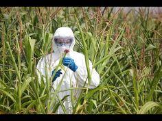 #Aspartaam, #GMO's, #Roundup en #Chemtrails