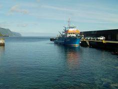 PORTO DA CALHETA: Traineira Pesca Atum no Porto da Calheta