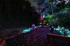 Nocturnal Trail Through Illuminated Forest Becomes Magically Immersive Experience - Foresta Lumina by Moment Factory