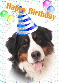 Happy Birthday Cards Images, Happy Birthday Pictures, Happy Birthday Greeting Card, Happy Birthday Messages, 50th Birthday Wishes, Happy Birthday Art, Animal Birthday, Dog Birthday, Birthday Memes
