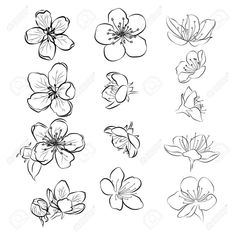 Set of cherry blossoms. Collection of flowers of sakura. Black and white drawing of spring flowers. Linear Art. Tattoo. Stock Vector - 103480361