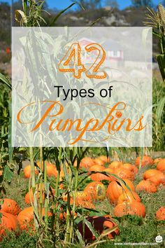 42 Types of Pumpkins