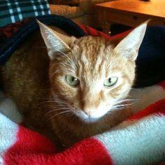 Crush 15 months old....the face of feline leukemia.