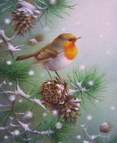 Robin in Snow by David Finney - Wildlife Artist & Illustrator.