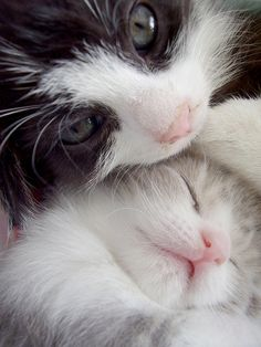 <3 My cat Rascal is a tuxedo cat. My cat Casper is all white. This picture…