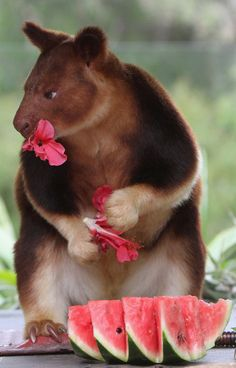 CRITTERS + FLOWERS    Taronga Zoo Animals Receive Enrichment Treats For Christmas