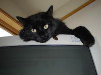 Neko monitors my work