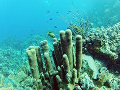 Snorkeling! We just love it!  #Luxury# #VirginGorda# #Caribbean# #BVI# #tropical# #paradise# #snorkeling# #reefs#  #beach# #ocean# #romantic# #MangoBay#