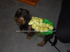158 best pet halloween costumes images on pinterest costume ideas cutest ever homemade corn dog costume for a dog solutioingenieria Image collections