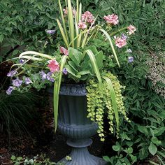 10 Plants for Year-round Containers | Fine Gardening