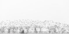 fly away by margit lisa roeder World's Biggest, Winter Is Coming, Photo Galleries, Lisa, Snow, Abstract, Outdoor, Outdoors, Outdoor Games