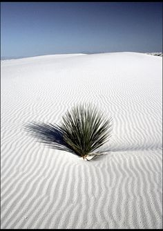 White Sands National Monument, New Mexico  Used to love playing the the sand dunes there as a child
