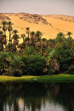 water, vegetation, and sand along the Nile River, Egypt