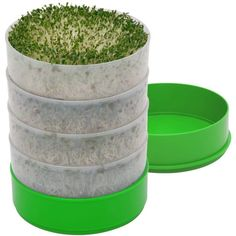 Top 10 Best Seed Sprouter Trays In 2020 Reviews Seed Sprouter Sprouting Seeds Seed Germination