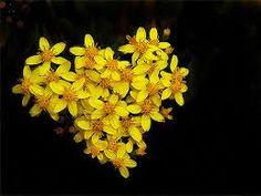 Yellow flowers, that look like St. John's Wart, shaped as a heart! www.jonli.com