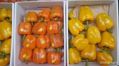 Local Agro Classifieds Pepper (sweet) yellow and orange - VEGETABLES - MOSCOW - FREE INTERNATIONAL CLASSIFIEDS
