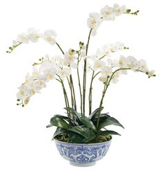 Silk flowers from Natural Decorations, Inc. - Orchid Phalaenopsis   Porcelain Bowl Blue White   White Cream