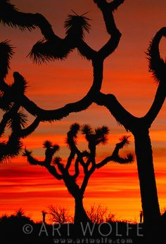 Sunrise, Joshua Tree National Park, California, USA
