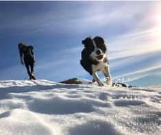 #snowpuppysunday This is Freddy. Freddy climbs mountains. You should too. Want to be like Freddy? Join the Further Faster Mountain Dog Challenge! www.mountaindogchallenge.co.nz Pic by Jess G and Freddy Mountain Dogs, Climbing, Join, Sunday, Challenges, Puppies, Mountains, Travel, Viajes