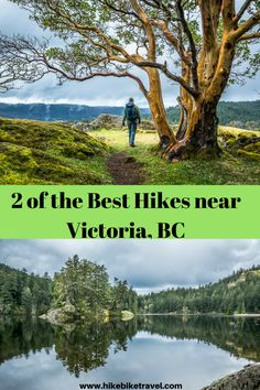For a great hiking experience in Victoria hook up with The Natural Connection. Learn about forest bathing as you do a couple of the area's best hikes. Victoria Bc Canada, Victoria British Columbia, Seattle, Discover Canada, Victoria Island, Forest Bathing, Visit Canada, Travel Activities, Outdoor Activities