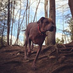 Off-leash exploring at Harmony Valley Dog Park! - Oshawa, ON - Angus Off-Leash #dogs #puppies #cutedogs #dogparks #oshawa #ontario #angusoffleash
