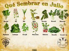 Germina La Florida: Calendario de Siembra de Julio