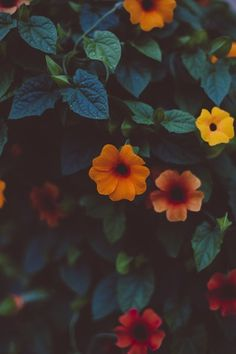 Vintage Flowers Photography Wallpaper Pretty Wall Papers 37 Ideas For 2019 Beauty Iphone Wallpaper, Trendy Wallpaper, Flower Wallpaper, Iphone Wallpapers, Beautiful Wallpaper, Nature Wallpaper, Spring Photography, Vintage Photography, Nature Photography