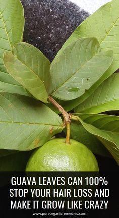 Guava Leaf Tea, Guava Leaves, Home Medicine, Natural Medicine, Herbal Medicine, Healthy Tips, How To Stay Healthy, Healthy Drinks, Healthy Habits