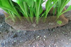 Vous changerez peut-être la façon de cultiver vos Hostas après avoir vu les trucs de ces jardiniers! - Trucs et Bricolages