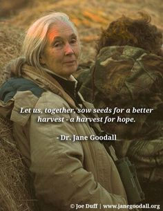 Jane Goodall Quotes New Inspiration From Trailblazer Jane Goodall The World's Foremost