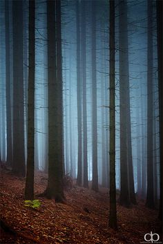 ♂ Foggy Forest #nature #trees