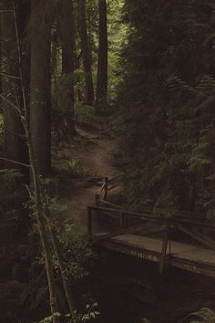 Wonderful Forest Trail and Bridge in Oregon!