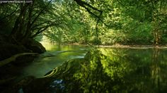 Forest River Wallpaper  #fYF