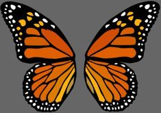 Best Tattoo Butterfly Wings Stained Glass Ideas You are in the right place about tattoo quotes itali Butterfly Wing Tattoo, Butterfly Wings Costume, Wood Butterfly, Butterfly Drawing, Butterfly Tattoo Designs, Butterfly Painting, Butterfly Crafts, Butterfly Wing Pattern, Monarch Butterfly Costume
