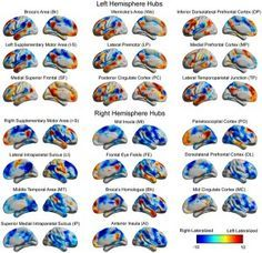 "Researchers Debunk Myth of""Right-Brained"" and ""Left-Brained"" Personality Traits - New neuroimaging research suggests there is no evidence to indicate ""right-brained"" or ""left-brained"" personality traits exist. Image credited to Jared A. Nielsen et al in PLOS ONE."
